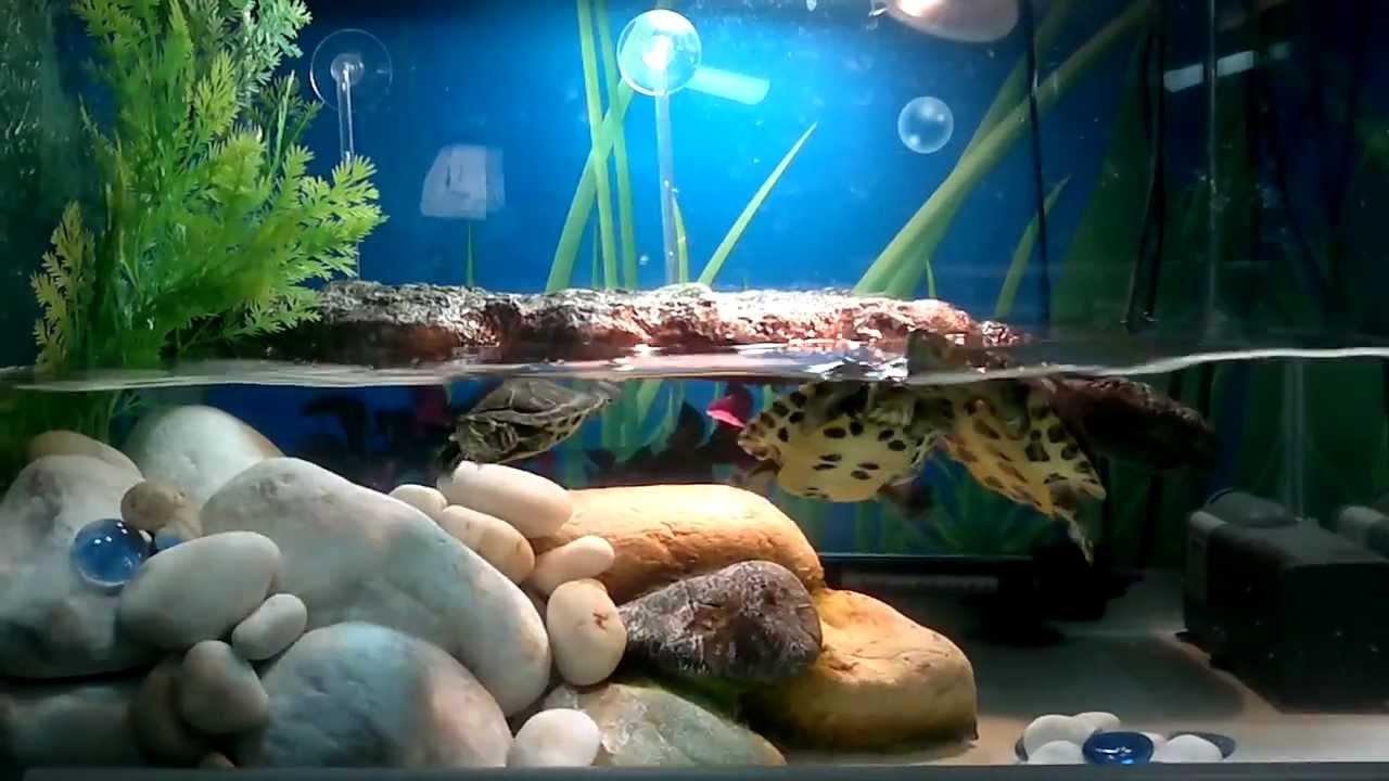 Tartarughe d 39 acqua dolce youtube for Acquario tartarughiera