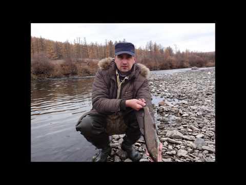 Рыбалка на хариуса в забайкалье видео