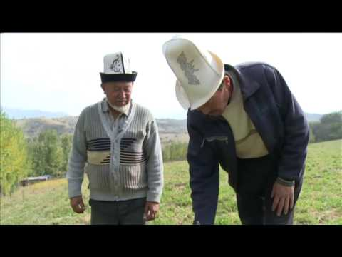 The walnut harvest in Kyrgyzstan | Business