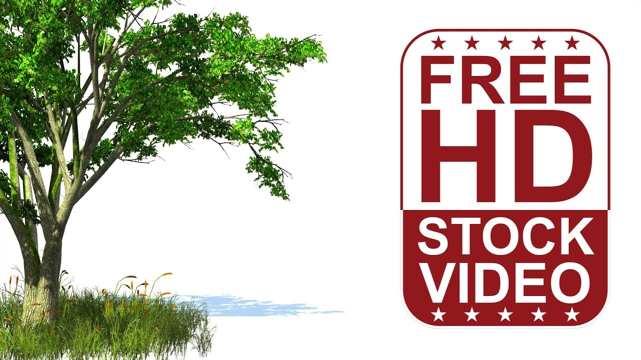 free hd video backgrounds u2013 3d animated tree and grass with wind