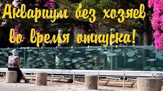 Что делать с рыбками во время отпуска. Аквариумные рыбки.(Что делать с рыбками во время отпуска. Аквариумные рыбки. Видео про рыбок - https://www.youtube.com/watch?v=P74XlbdS3MQ&list=PLdDDYlntQ-W..., 2016-06-11T13:51:58.000Z)