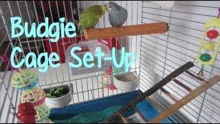 Budgie/Parakeet Cage Set-Up