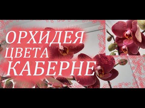"""""""Винная"""" ОРХИДЕЯ.Маленькие радости поднимают иммунитет;))"""
