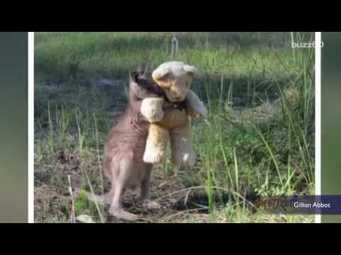 Photo of baby kangaroo snuggling a teddy bear goes viral