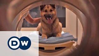Вчені: собаки розуміють людську мову