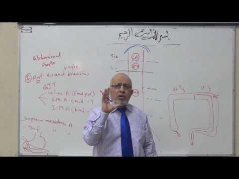 Module D - Abdominal aorta, lumber lymph nodes and mesenteric plexus