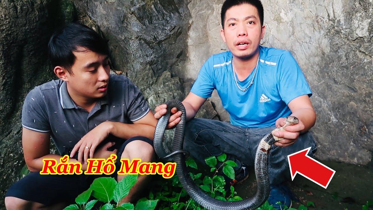 Cùng Trần Thạch Vlogs TV Săn Bắt Ẩm Thực Vùng Cao | Truy Tìm Dấu Vết Rắn Hổ Mang