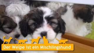 Mischlingshunde Welpen In Stadtlohn