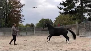 Drone ,montrer rassurer et insister