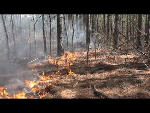 Controlled Burns For Wildlife Management - The Management Advantage #68