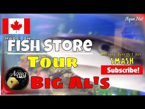 Fish Store Tour MASSIVE Shark Tank | Big Al's Aquarium Shop, Barrie