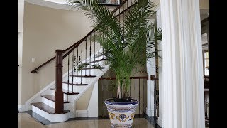 Growing Areca Palm Indoors in Canada