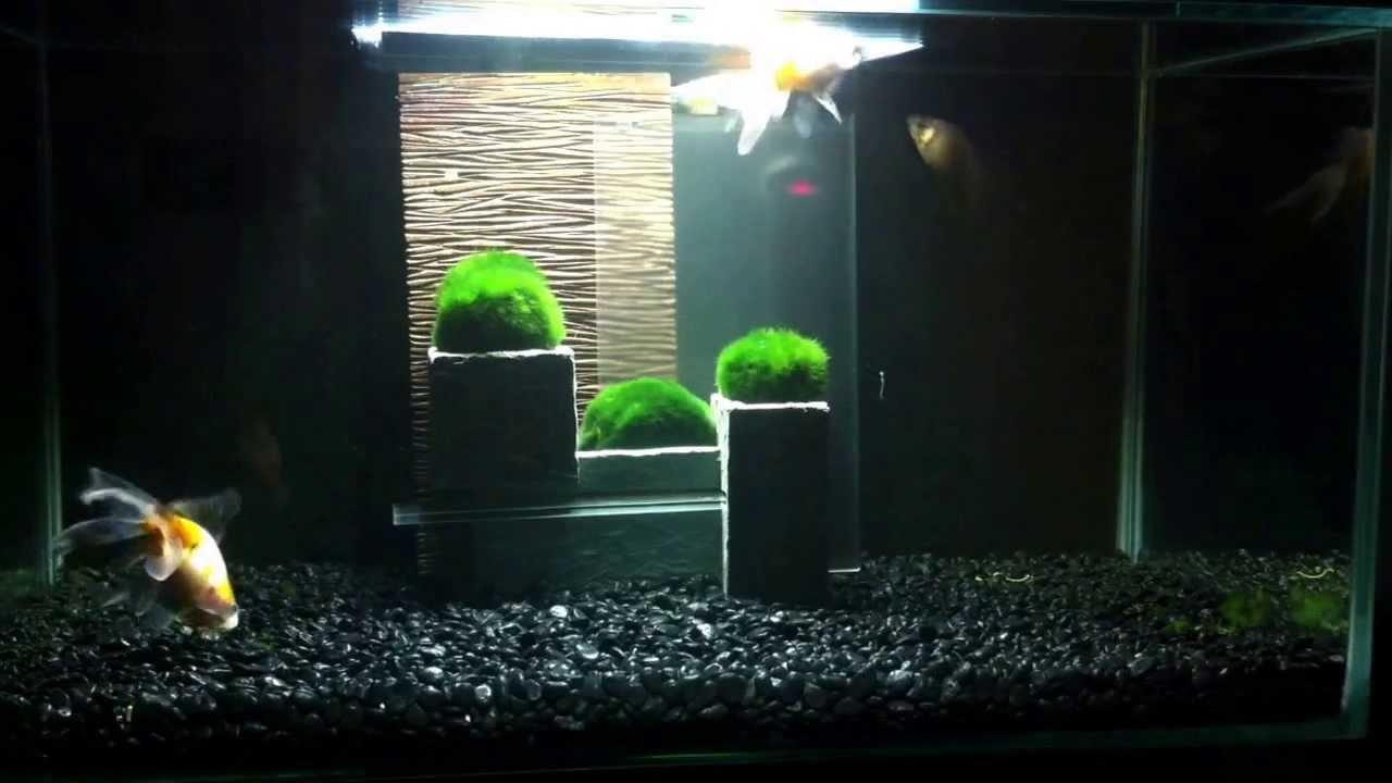 Aquarium Fluval Edge  YouTube