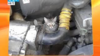 Кошки выбирают Ладу Калину