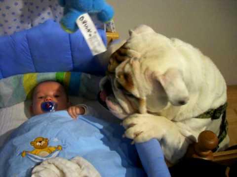 British Bulldog - Tierliebe - baby and dog - funny - english Bulldog