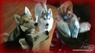 SANTA PAWS CAME! Merry Christmas friends! thumbnail
