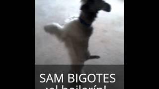 Sam Bigotes