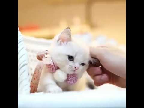 Best WhatsApp status | cute cat WhatsApp status | co cute cats | cute Animals status