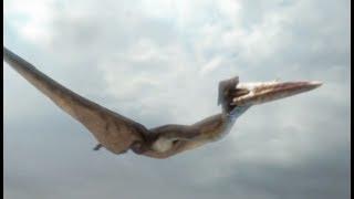 Hatzegopteryx : la plus grande créature volante (Planète Dinosaures) - ZAPPING SAUVAGE