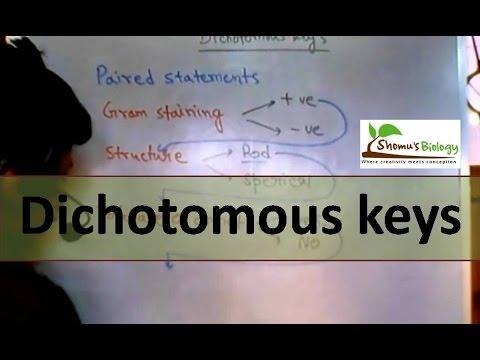 Dichotomous key - YouTube - dichotomous key template word