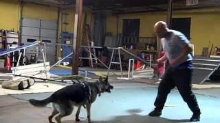 Interstate Schutzhund Club Training Class. Feb 21, 2012.mp4