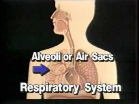 Human Body Systems Respiratory