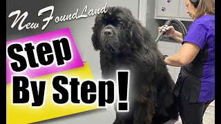 GROOMING a NewFoundland DOG step by step LESSON