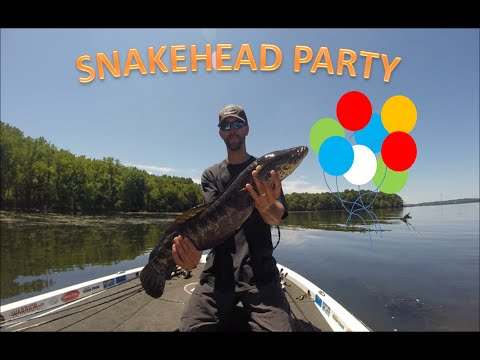 POTOMAC RIVER SNAKEHEAD FISHING