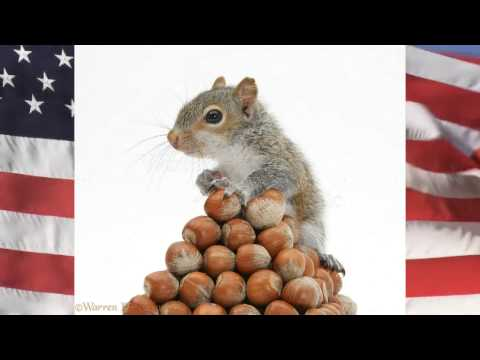 Deez Nuts Campaign Video Independent Candidate for President of the United States