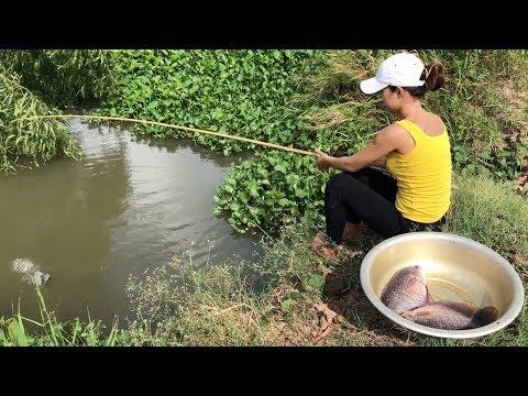 Survival Girl Fishing For Giant Gourami Fish