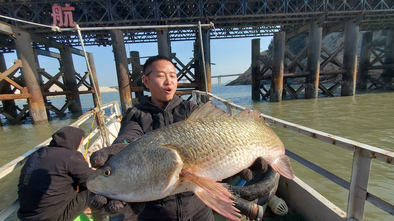 大桥下凶猛的美国大红鱼吃口威力太猛,阿峰连人都被拉倒,太大了