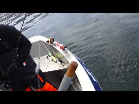 Norway Halibut Fishing in Sandland Loppa