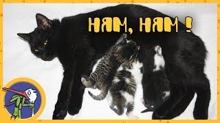 Переселение кошки Китти с котятами в новый домик