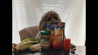 Dog Reviews Different Types Of Food ASMR