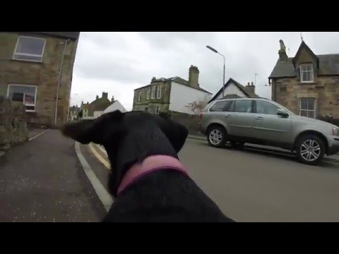 Dog walk with Go Pro Silver in Elie
