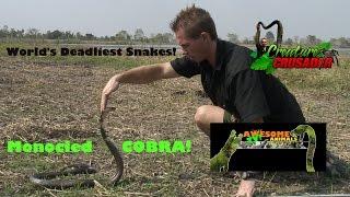 Top Ten Worlds Most Dangerous Snakes - Monoceled Cobra