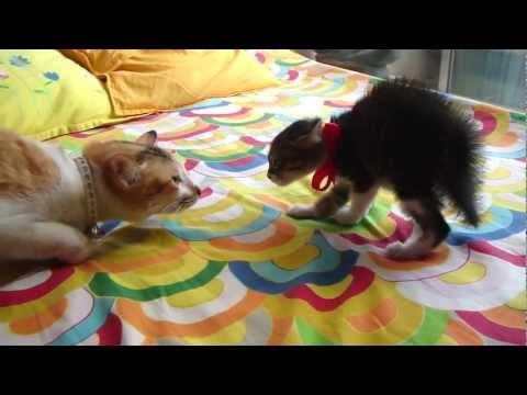 Cat meets kitten