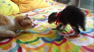 Cat meets kitten