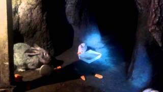 Кролики в яме зимой 10.01.2016(Видео про содержание Кролики в яме зимой 10.01.2016 Мой опыт по содержанию кроликов в яме круглогодично видео..., 2016-01-10T16:58:56.000Z)