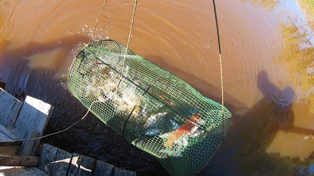 Рыбалка на Мордушку(Корчагу)/Рыба Есть/Судак/Плова(Чебак)/Карась/Рыбалка в Сибири