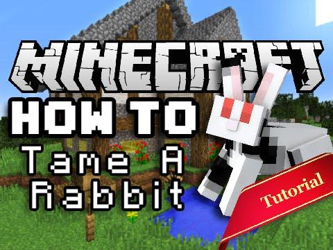 Rabbits Breeding rabbits 2018 - YouTube
