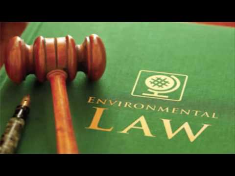Labour law and employment lawyer
