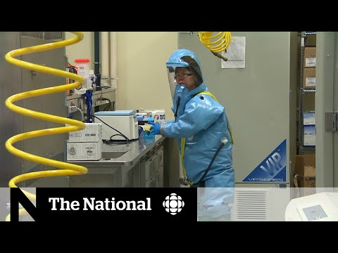 Canadian scientist sent deadly viruses to Wuhan lab months before RCMP asked to investigate
