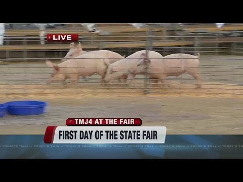 Pig and duck races at the State Fair