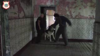 Собаки телохранители работают в экстремальной ситуации с хозяином