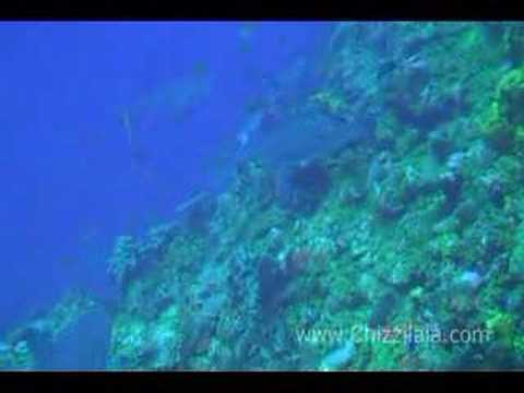 Sharks, Saba, Diving