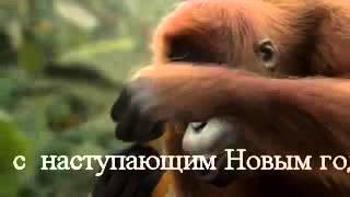 Прикол. Танцующая пьяная обезьяна