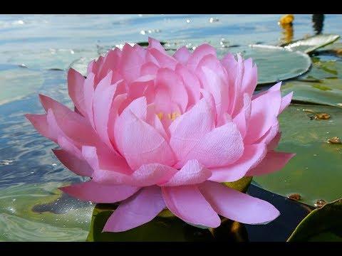 Цветы из гофрированной бумаги  -  большая кувшинка