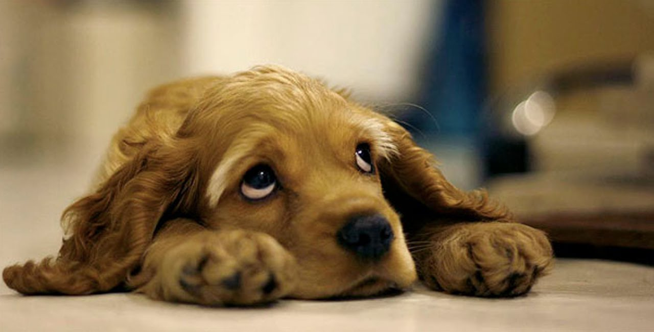 25 sad facts about animals that might make you shed a tear youtube
