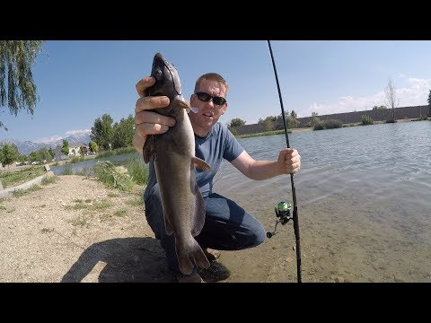 How To Catch Catfish In A Pond - Bank Fishing For Catfish In A City Pond
